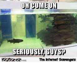 Funny Saturday Memes - funny forever alone fish meme pmslweb