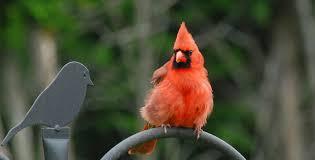 thanksgiving birding in southern ontario bird canada
