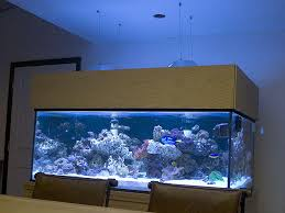 Reef Aquarium Lighting Best Lighting For Sps Dominated Shallow Reef Reef Central Online