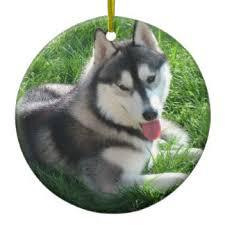 siberian husky ornaments keepsake ornaments zazzle