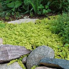 Backyard Ground Cover Ideas Ideas Best Hillside Ground Cover Landscaping Los Angeles Backyard