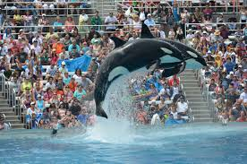Sea World San Diego Map by Seaworld San Diego Ending Killer Whale Theatrical Shows But