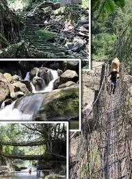 travel trekking to the living bridges of cherrapunji rediff