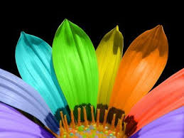 Flowers Colors Meanings - the meaning of flower colors flower color meanings meaning of