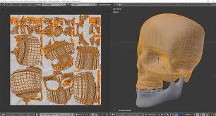 Human Anatomy Skull Bones Anatomy Human Skull