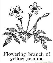 jasmine 1 coloring free flowers coloring pages