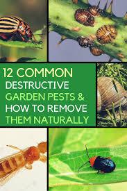 organic garden pest control remove these 12 destructive pests