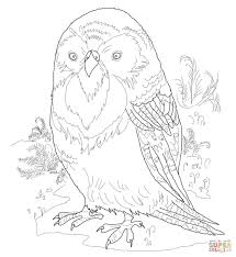 kakapo coloring page free printable coloring pages
