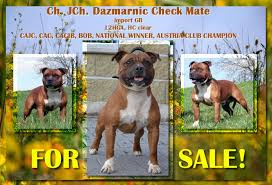 american pitbull terrier z hter deutschland news 2013