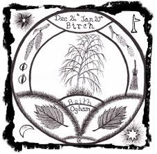 symbolism trees the ogham trees the magic of birch beith