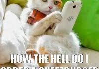 Meme Cheezburger - deluxe cheezburger cat meme cheezburger memes image memes at