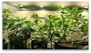 best indoor growing tips for healthy plants youtube