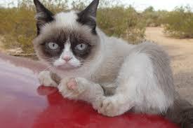 Original Grumpy Cat Meme - grumpy cat 1530 6929382