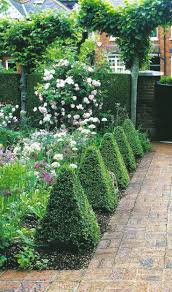 English Box Topiary - 85 best topiary images on pinterest landscaping formal gardens