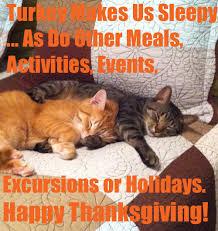 happy thanksgiving everyone catz got a