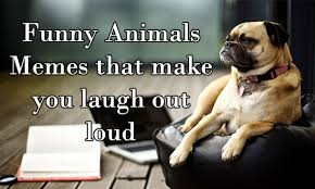 Funny Animals Memes - funny animals memes that make you laugh out loud funny animal memes