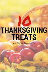 thanksgiving pet photos 206 best dog food u0026 dog treat recipes images on pinterest dog