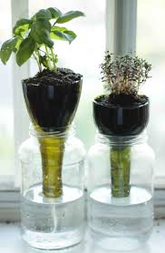 self watering plants little projectiles self watering glass planters