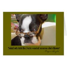 Get Well Soon Meme - sick dog cards greeting photo cards zazzle