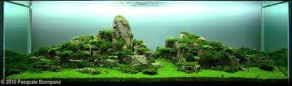 Aquascape Aquarium Plants Aquascape Examples Aquascapers