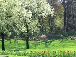 Clark Botanical Gardens 22 Best Clark Garden Visitors Images On Pinterest Clarks Band