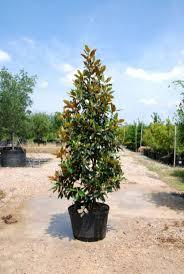 19 best australian native plants images on pinterest native