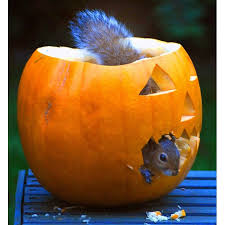 animals tuck into halloween pumpkins at zoos around the world