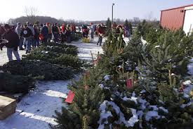 tree sales and events at big tree plantation trees and