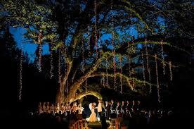 how to string lights on a tree large tree raining string lights birddog lighting blog