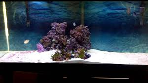 Home Aquarium by My 120g Great Barracuda Lionfish And Snowflake Eel Aquarium And