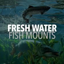 freshwater fishmounts mounted fish fish replicas fish