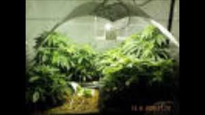 Miracle Grow Patio by Paperboy Money Liquor Youtube