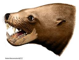 ancient u0027killer walrus u0027 not so deadly after all