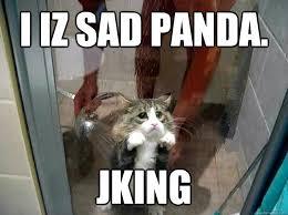 Sad Panda Meme - i iz sad panda jking shower kitty quickmeme