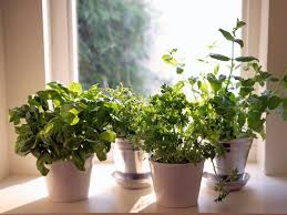 28 indoor herbs 14 diy indoor garden ideas diy to make indoor herbs grow a indoor herb garden hgtv