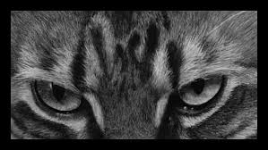 question how to draw cat fur wetcanvas