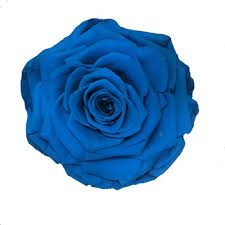 blue roses for sale delicate wholesale different types of fresh cut flowers white