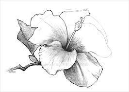 pen drawings of flowers 21 flower drawings art ideas sketches