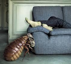 se débarrasser d un canapé comment sortir les punaises du divan d où elles viennent et comment