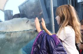 saint louis zoo chosen as nation u0027s u0027best zoo u0027 cbs st louis