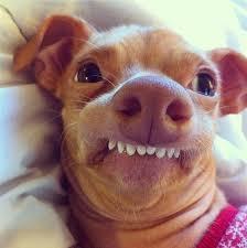 Annoyed Dog Meme - annoyed meme google search random pinterest meme and random