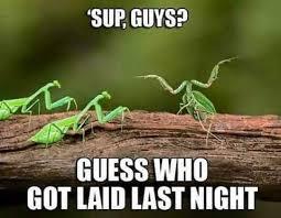 Sup Meme - sup guys guess who got laid last night mantis memes and comics