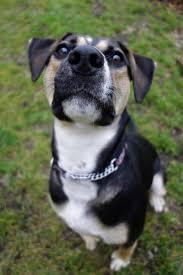 meet kenzie foster to adopt needed a petfinder adoptable