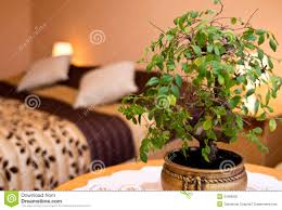 pot plant in a bedroom royalty free stock photo image 31669505