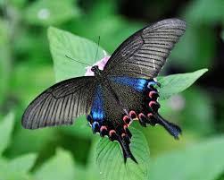 23 especially stunning butterflies nature babamail