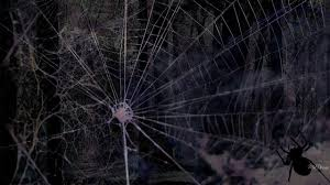 halloween background black spider web spider web halloween wallpaper