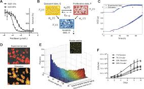 mathematical modeling reveals that changes to local cell density