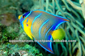 sri lanka tropical fish aquarium fish ornamental fish view