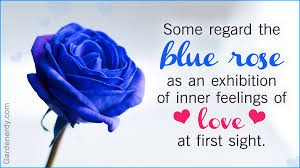 Meaning Of Opulence Symbolic Meaning Of Blue Roses That U0027ll Leave You Stupefied