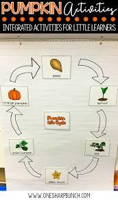 pumpkin life cycle activities one sharp bunch